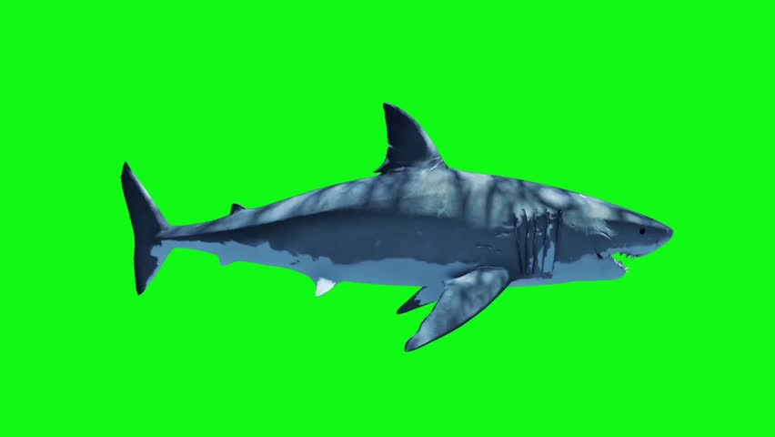 White Shark Swim Fast Loop Side Green Screen 3D Rendering Animation #27019324