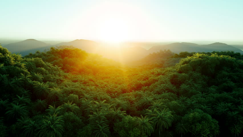 Mountain, field landscape with Palm trees. Jungle. Realistic 4k animation . Aerial view.