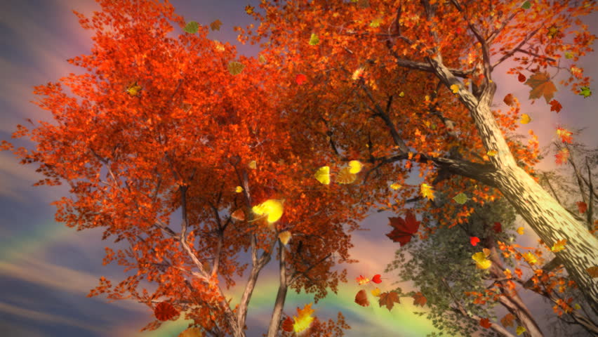 1035 Fall Trees Falling Leaves and Rainbow Storm