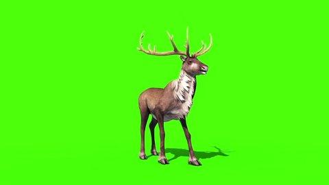 Animal Reindeer Screams Front Green Screen 3D Rendering Animation