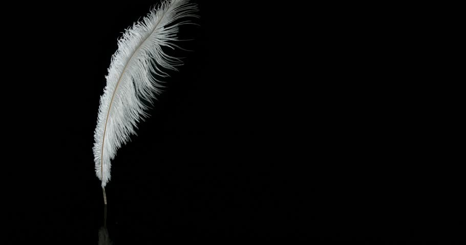 white feathers falling against black background normandy