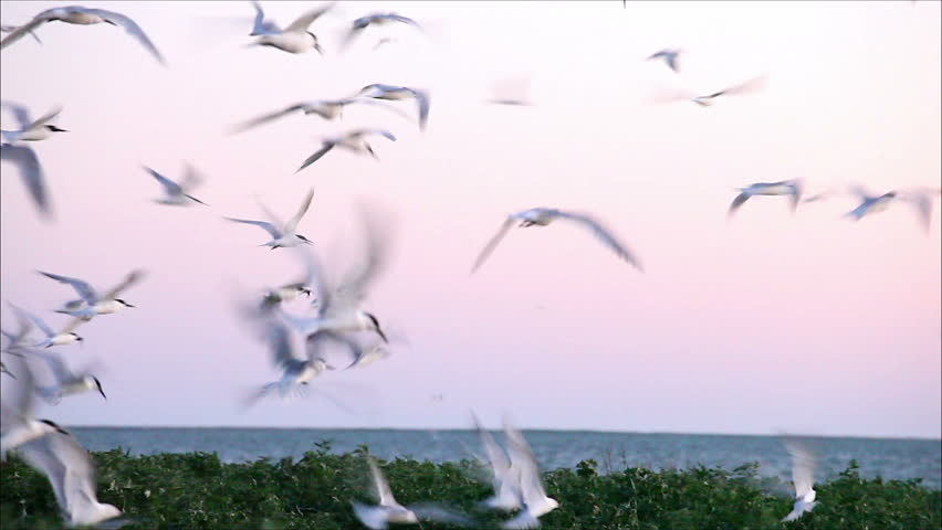 large flock of birds in the evening 4