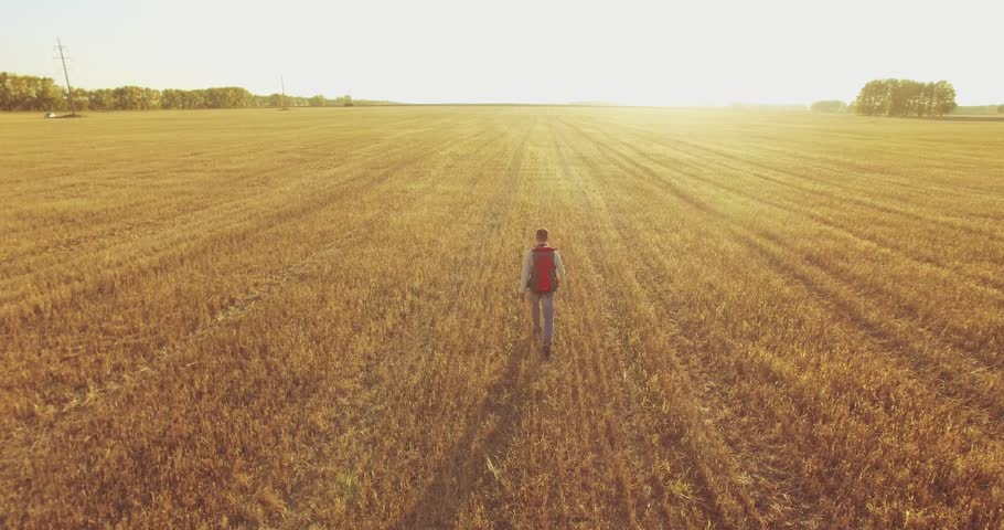 Aerial 4K UHD view. Low flight over young man tourist walking across a wheat field. Huge flat rural meadow at sunny summer day. Backpack hiker guy.   Shutterstock HD Video #27432544