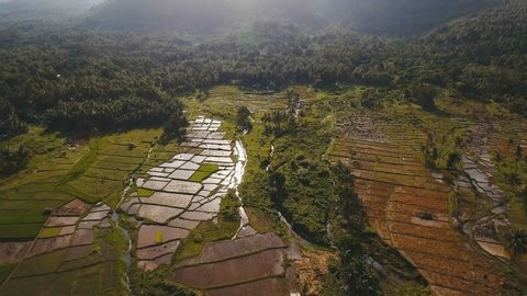 Terrace rice field from aerial view. Aerial view of a rice field. Terrace rice field from on the background of mountains and hills. Philippines, Camiguin. 4K video. Aerial footage.