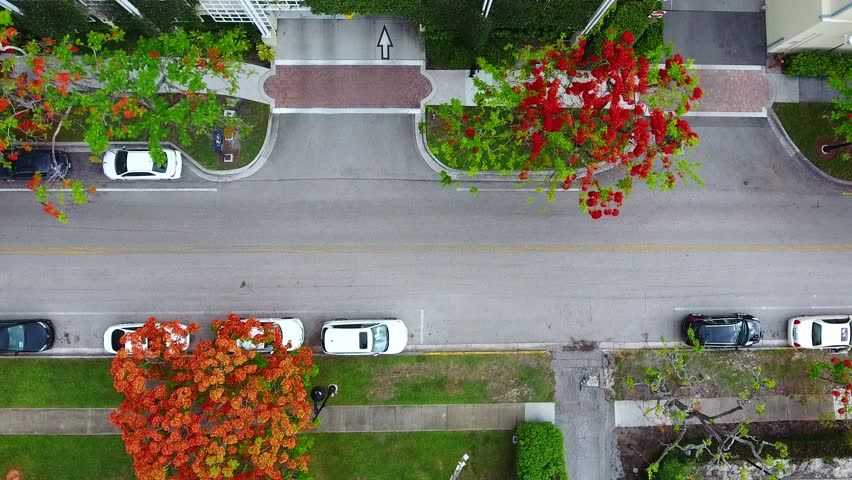 Drone aerial slow horizontal fly over video footage on a gloomy day with colorful acacia and maple red orange and yellow trees with cars drive by on paved gray asphalt side walk residential area road | Shutterstock HD Video #27497614