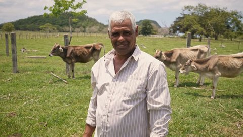 Everyday life for farmers with cows in South American countryside. Peasants work in America with livestock in family country ranch. Manual job and people in farm. Happy grandfather smiling at camera