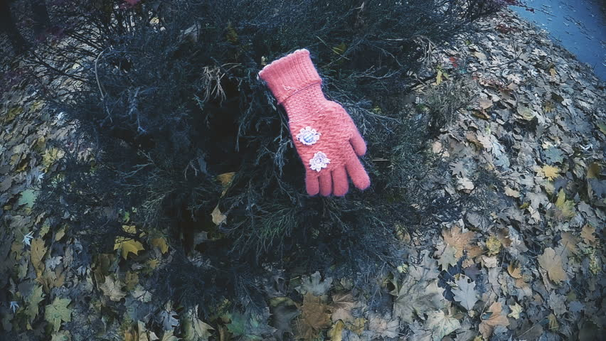 Kids glove found on bush in park, evidence confirming kidnapping of little girl