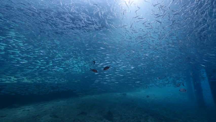 School of fish underwater under pear  | Shutterstock HD Video #27565708
