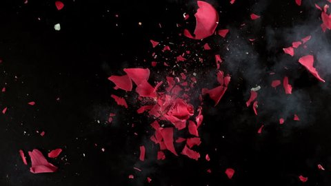 Red rose flower exploding in super slow motion, shot with Phantom Flex 4K