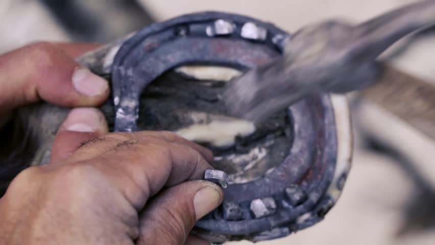 Trimming, cleaning, shaping and cutting the excess sole tissue off the horse's hooves using knife in blacksmith shop. Horseshoe maker horseshoeing the horse. Azerbaijan | Shutterstock HD Video #27708214