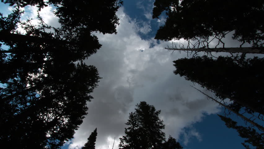A motion time-lapse of evergreen trees in Rocky Mountain National Park, Colorado with storm like clouds moving overhead | Shutterstock HD Video #2771204