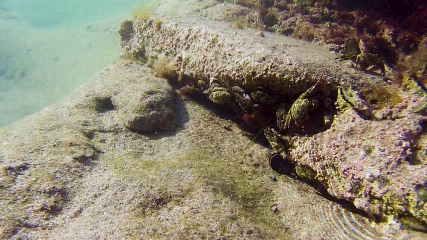 Header of crabby