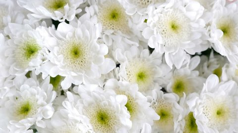 close-up, view from above, Flowers, bouquet, rotation, floral composition consists of white Chrysanthemum Chamomile bacardi.