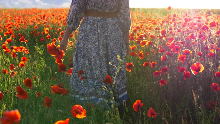 Young woman with flowers at her hand walking through poppy field | Shutterstock HD Video #27877624