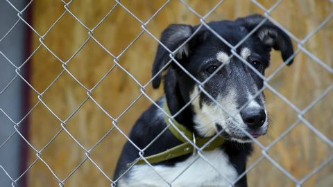 Sad dog in his cage at animal shelter waiting to be adopted. Lonely puppy in aviary.