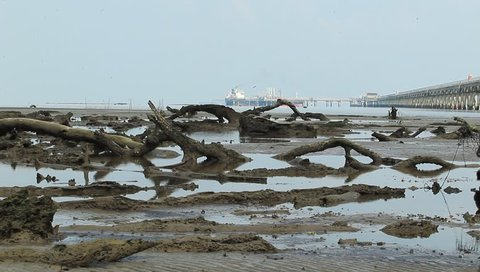 PORT DICKSON, MALAYSIA 23 JUNE 2017 : The dead wood is stranded around the coast of Port Dickson, Negeri Sembilan, Malaysia.