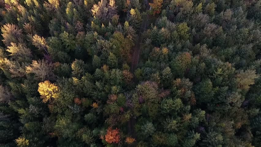 Aerial shot over a forest | Shutterstock HD Video #28271854