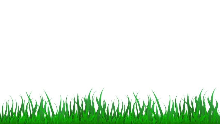 green grass growing timelapse isolated on white