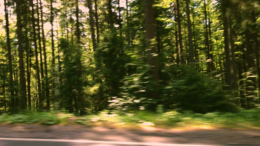 Car side view summer forest motion blur background