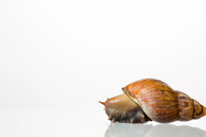 Snail in front of white background