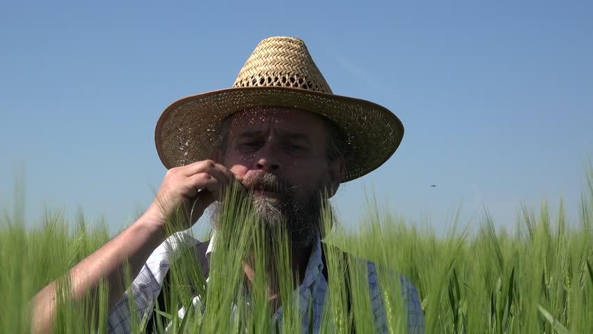 Happy farmer with beard in hat sits among an green wheat field: Summer   Shutterstock HD Video #28505524