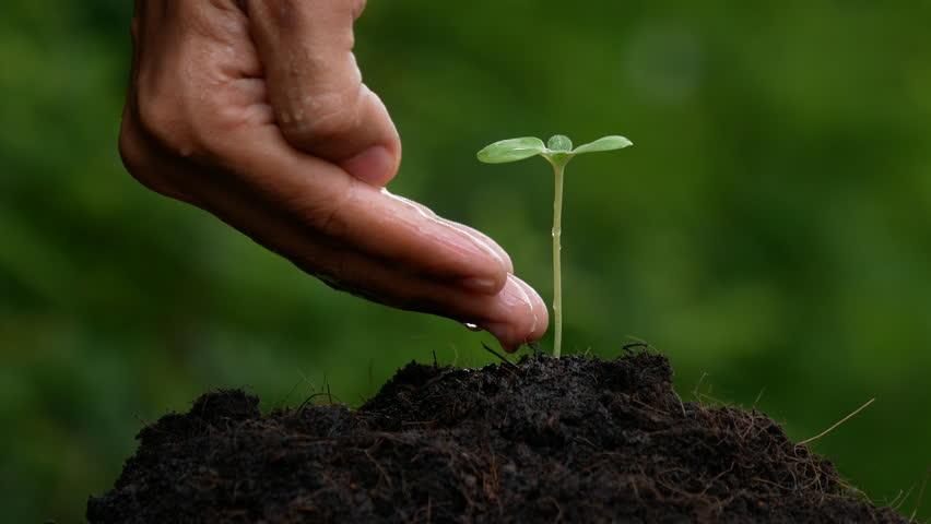 Hand watering tree in a pot. | Shutterstock HD Video #28557028