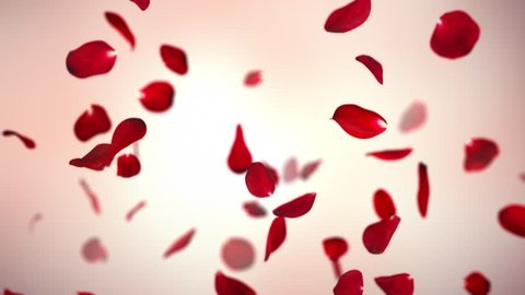 Valentine's Day Rose Petals on Warm Background Loop