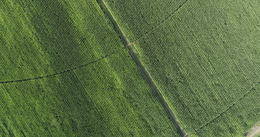 High aerial view of irrigation patterns in corn field | Shutterstock HD Video #28855894