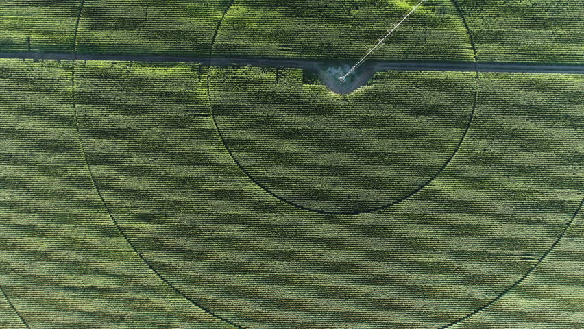 Aerial view zoom out of rows of corn | Shutterstock HD Video #28856314