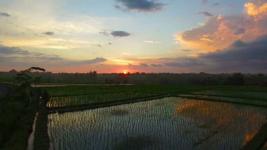 Scenic aerial video footage of rice fields and Bali village at sunset | Shutterstock HD Video #28863103