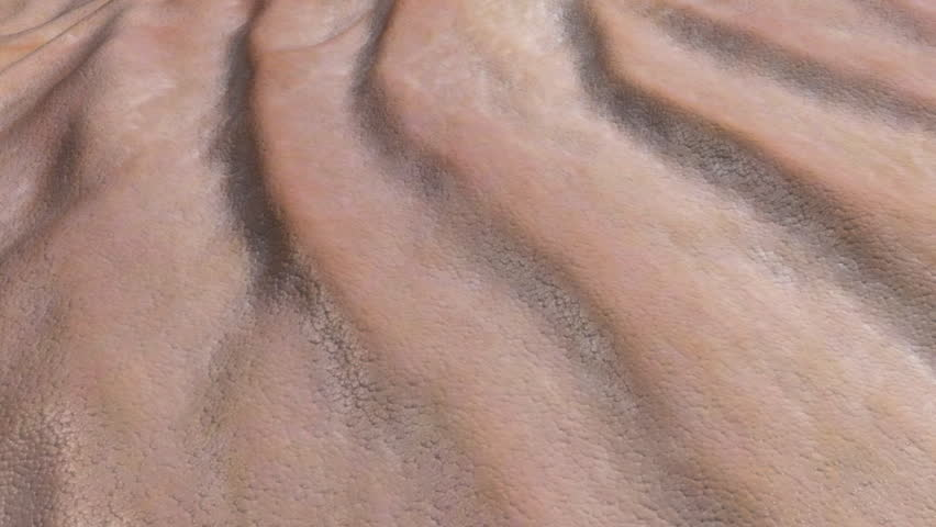 Skin surface wrinkle animation. Close up of skin wrinkles with aging effects  or for playing in reverse for a reverse aging effect. Speed can be changed.This is an artistic simulation.  | Shutterstock HD Video #288814