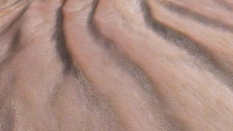 Skin surface wrinkle animation. Close up of skin wrinkles with aging effects  or for playing in reverse for a reverse aging effect. Speed can be changed.This is an artistic simulation.