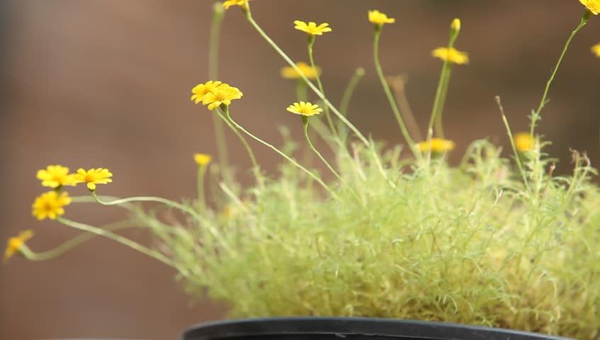 Stock video of arctic tundra flowers 32879740 shutterstock hd0010breeze cosmos flower meadow in morning mightylinksfo