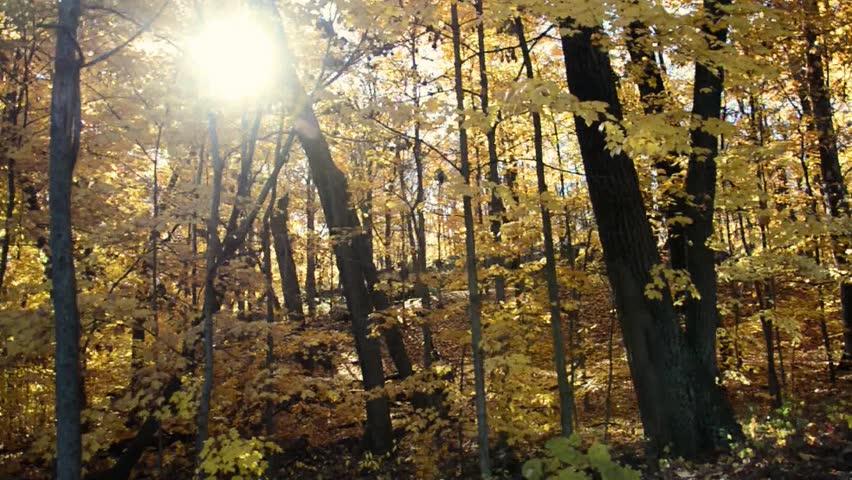 walk through the woods at sunrise