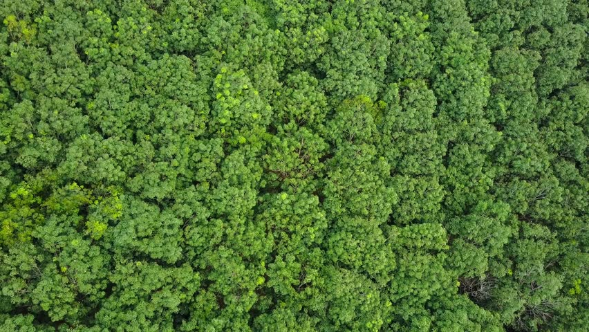 Top View Of Mangrove Forest. Stock Footage Video 17651602 ...