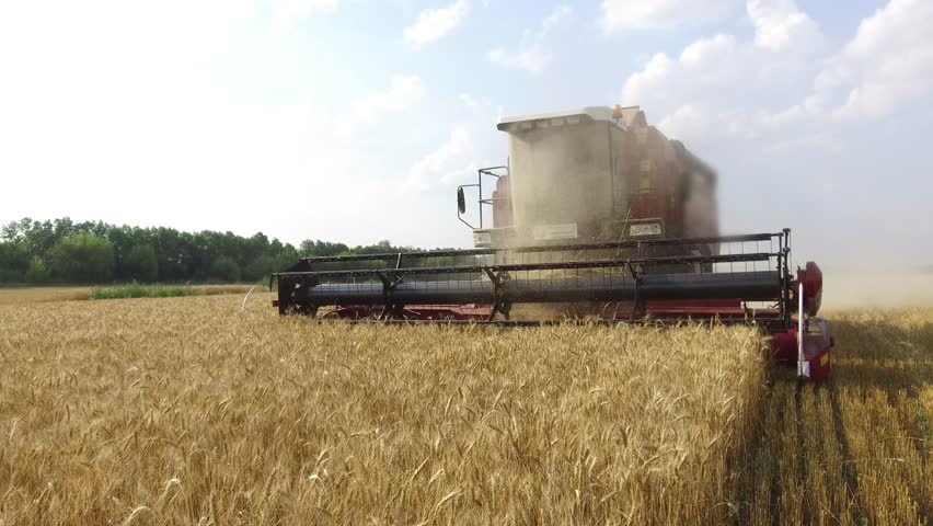 Wheat harvesting shearers. Wheat is harvesting agriculture. Harvesting wheat bread steadicam shot motion video