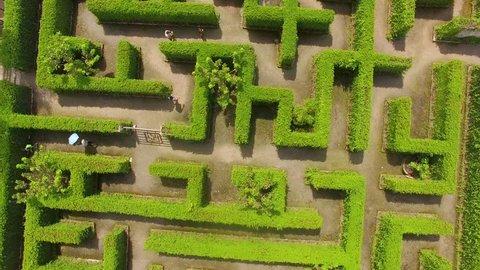 Green maze garden