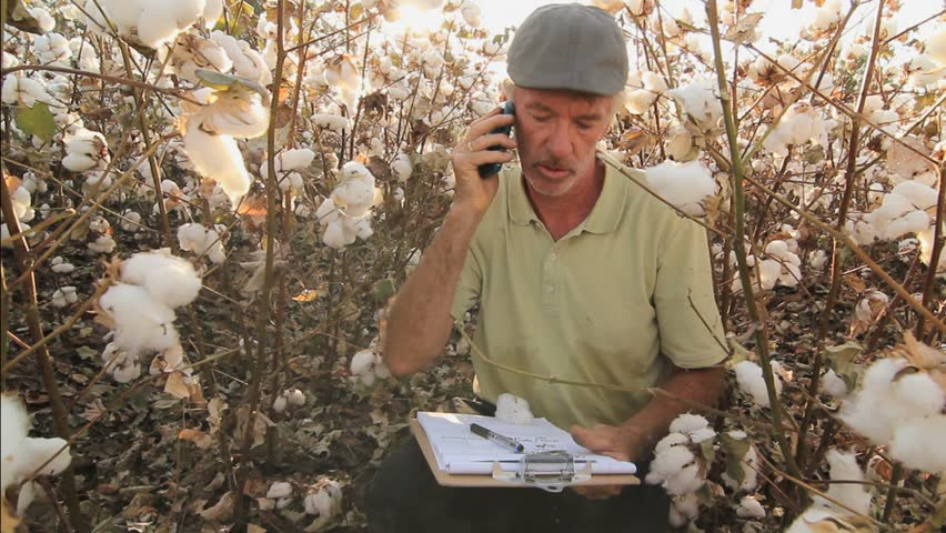 Agricultural worker, farmer, discusses business on phone in cotton field. 1080p