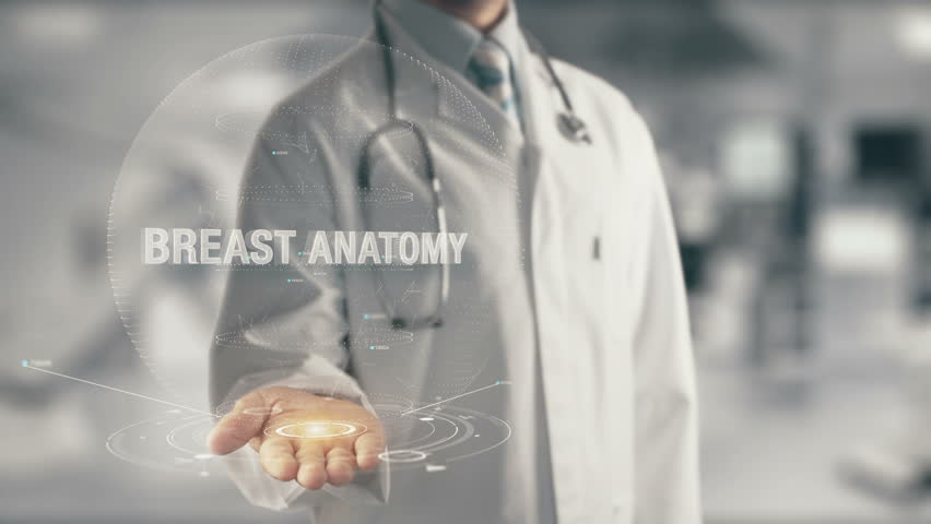 Doctor holding in hand Breast Anatomy