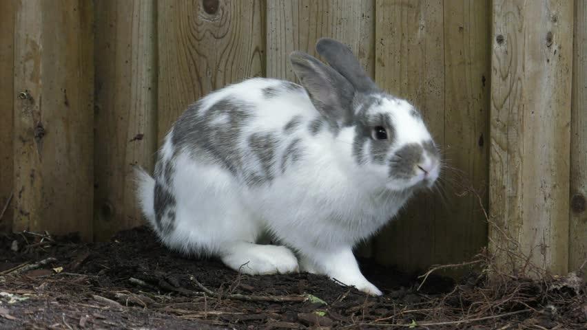 Beautiful hares rub their holes