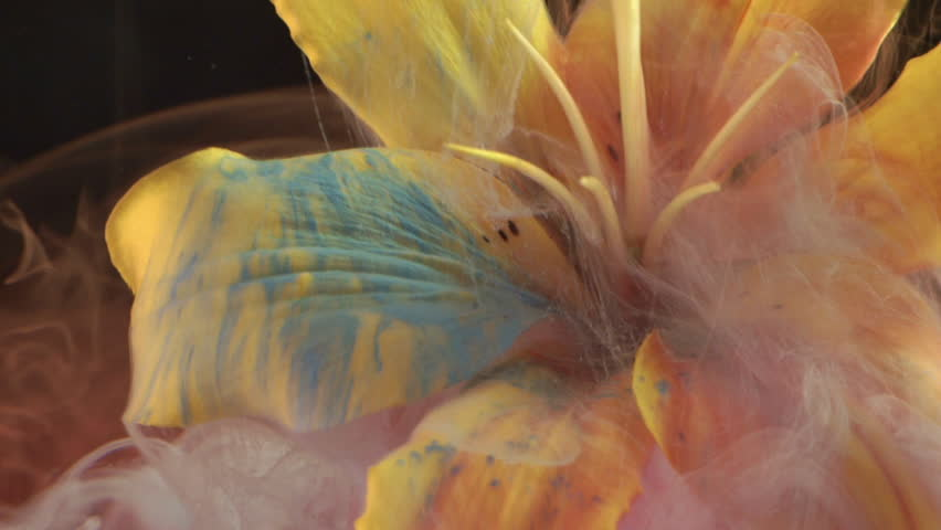 Yellow lily and paint in water. Abstract ink in water.