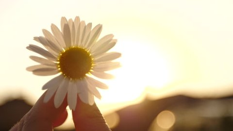 Girl holding a Daisy at sunset