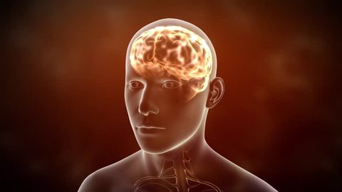 Neuronal Activity Male Red Conceptual animation showing neuronal activity in the human brain.