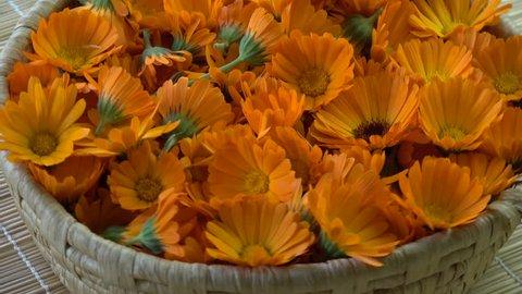 Rotating fresh medical marigold calendula flowers in basket background