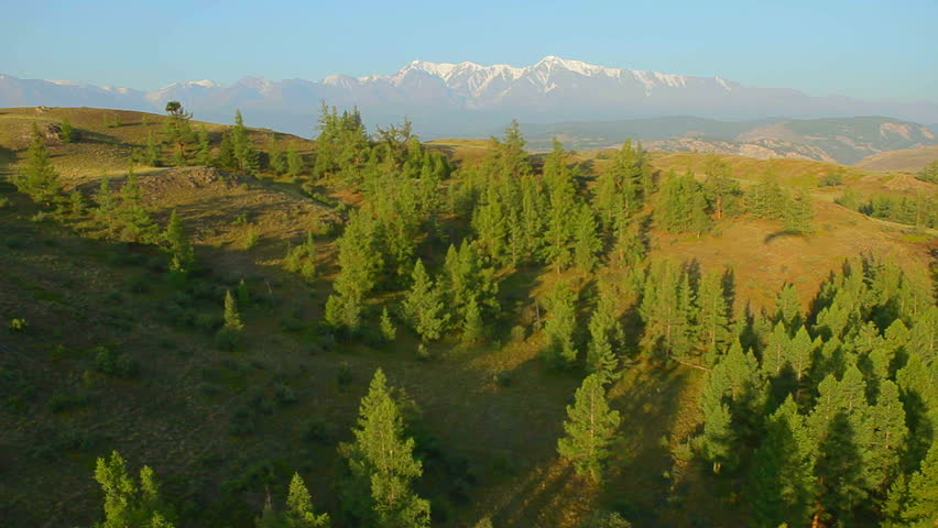 Aerial View. Flying over the beautiful forest trees. Aerial camera shot. Landscape panorama. Shadow paraglider, Altai, Siberia.  | Shutterstock HD Video #3019813