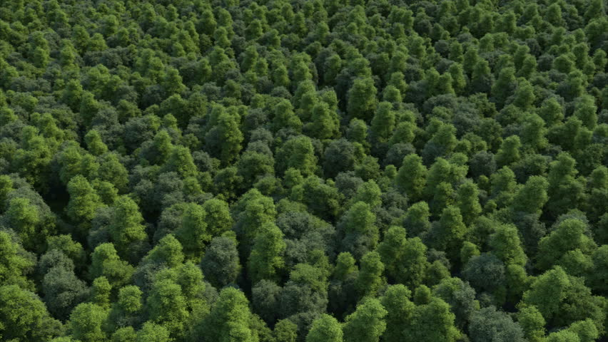 3d rendering ultra high quality video. Texture of forest in an aerial view. Beautiful panoramic image over the tops of pine forest. The video is made as if using a helicopter. Loopable animation.