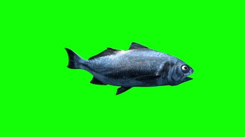 Fish Swim Green Screen Side 3D Rendering Animation