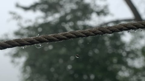 Dew drops on a rope on the background of trees
