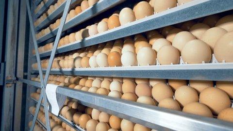 Eggs rack, eggs shelves in an incubator. 4K.