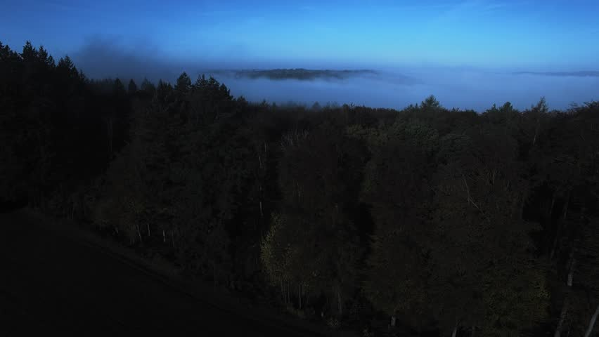 Foggy Forest at night in germany | Shutterstock HD Video #30596884